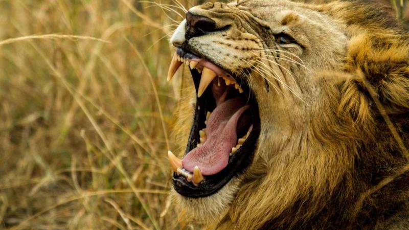 Gruñidos de animales que se ralentizan, bajan y atraviesan los efectos