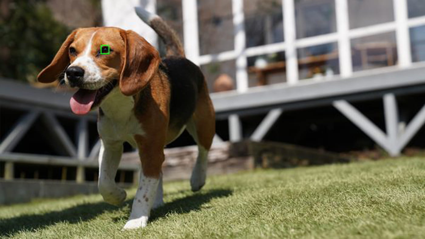 The Real-time Animal Eye AF uses AI-driven technology to track cats and dogs
