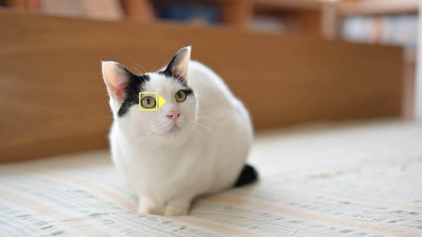 Nikon animal eye tracking