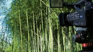 Sony PXW-Z100 4K camcorder shooting in a bamboo field.