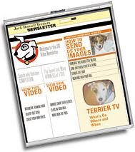 Video Newsletter Idea Comes Unbeknownst